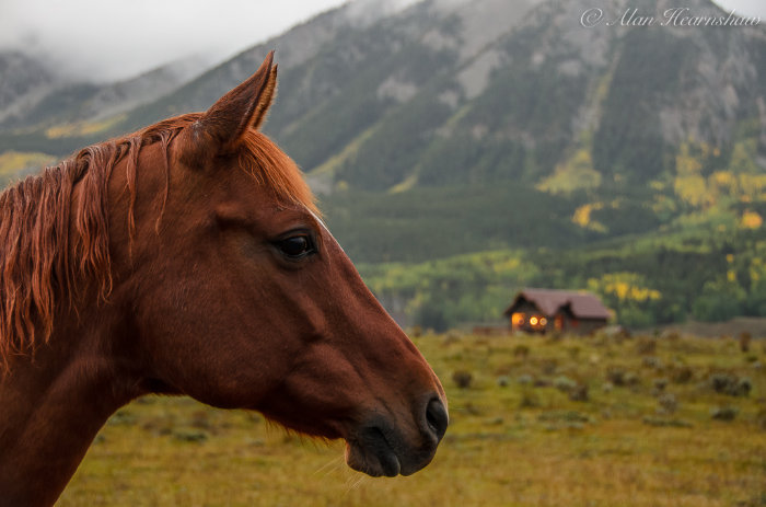 A horse in the early morning. Crested Butte, Colorado