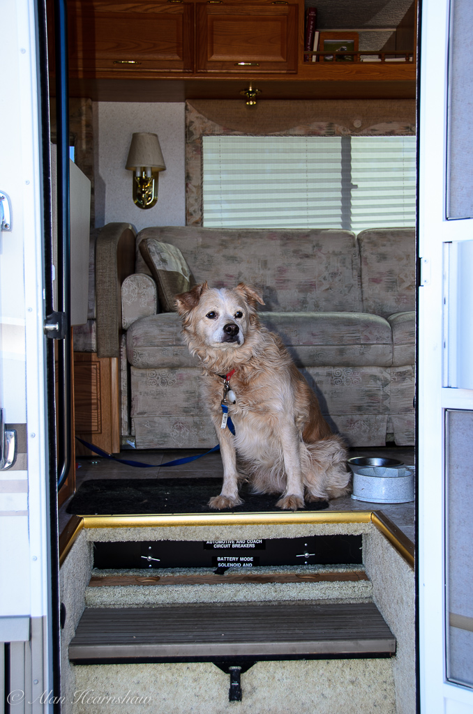 My dog, Sally, looking out of the motorhome door